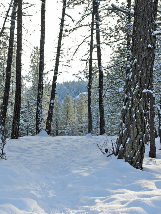11 Snowshoeing Tips and tricks to get your prepared for your first snowshoe trip.