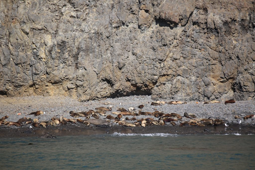 Seals and sea lions at Channel Islands National Park Anacapa Island