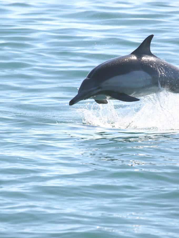 Channel Islands National Park Travel Tips
