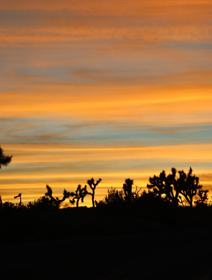 10 Things to do in Joshua Tree National Park