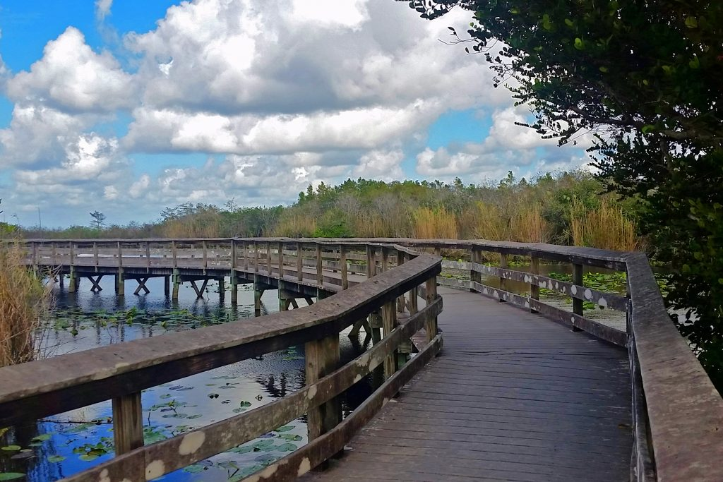 Fun activities and things to do at Everglades National Park Florida, pictures included. Ideas include Air Boat rides, sunrises and sunsets, hiking trails, boat tours, visiting Shark Valley and Flamingo, seeing alligators, crocodiles and bird watching.