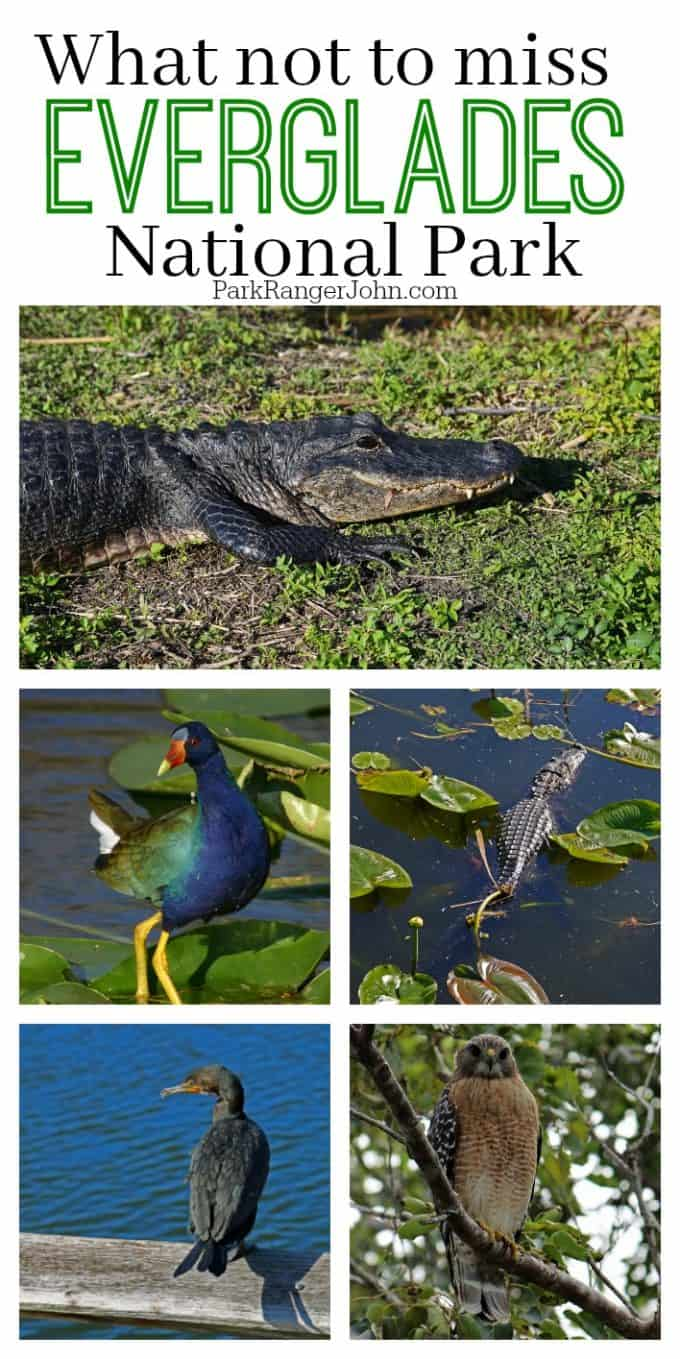 What not to miss during your Everglades National Park Vacation in Florida! The top things to see and do during your bucket list adventure. Alligators, birds, airboat rides, sunset, activities, animals and more!  #everglades #nationalpark #nps #findyourpark #florida #wildlife #airboat #alligator #bucketlist #adventure