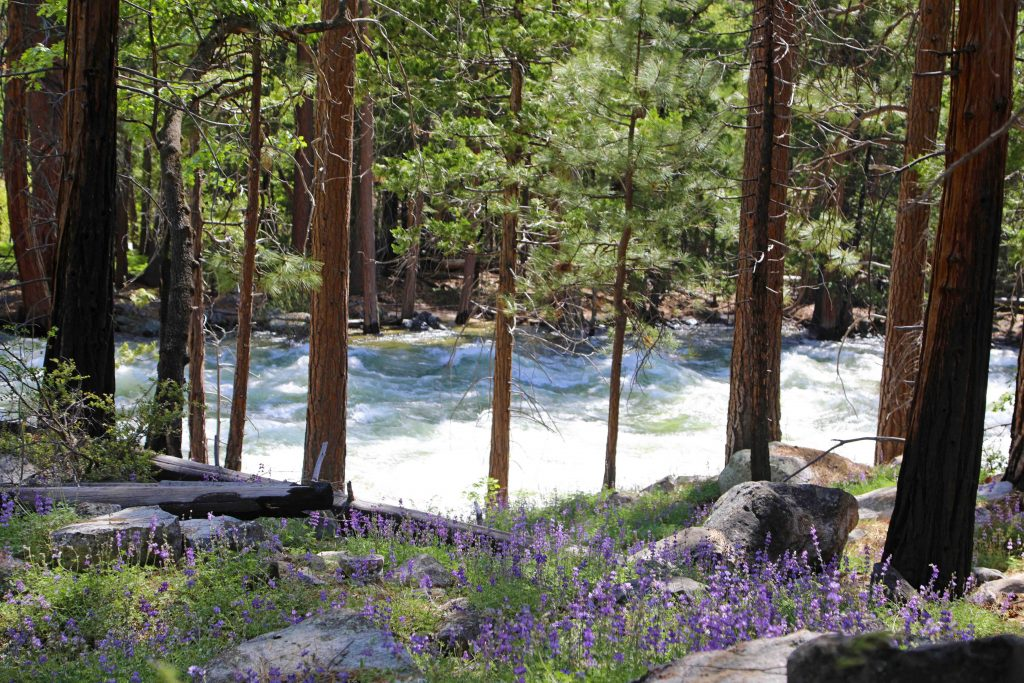 Kings Canyon National Park in California has massive Sequoia Trees, the Cedar Grove Area, waterfalls and a beautiful scenic drive! Use this travel guide to plan your bucket list adventure including hikes and walks.