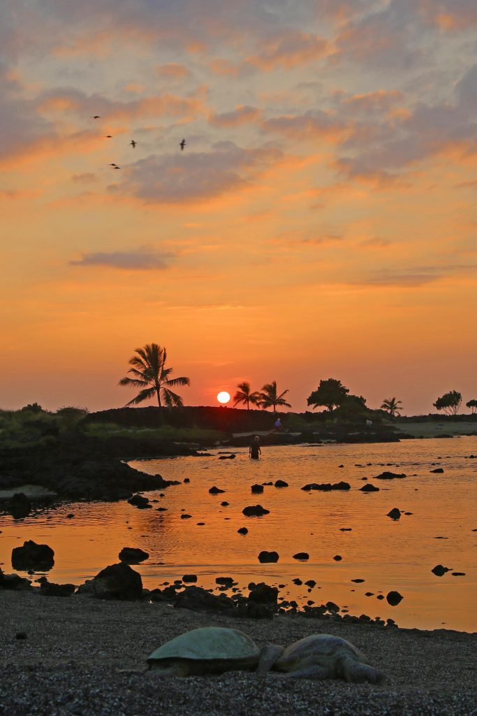 Kaloko-Honokohau National Historic Park is located just north of Kona Hawaii. It's a great location to see Green Sea Turtles, go bird watching, watch sunsets, go hiking, learn about traditional Hawaiian fishing and visit the parks visitor center.