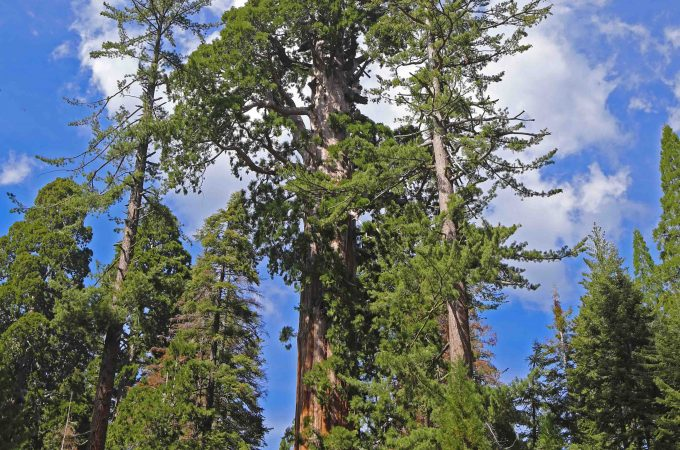 Things to do Kings Canyon National Park