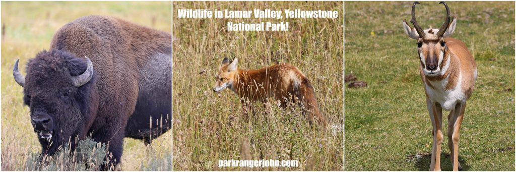 Things to do in Yellowstone National Park. Tips for planning your vacation at this bucket list destination including hiking,wildlife viewing, seeing hot springs, geysers and local parks like Grand Teron and the John D Rockefeller Jr. Memorial Parkway