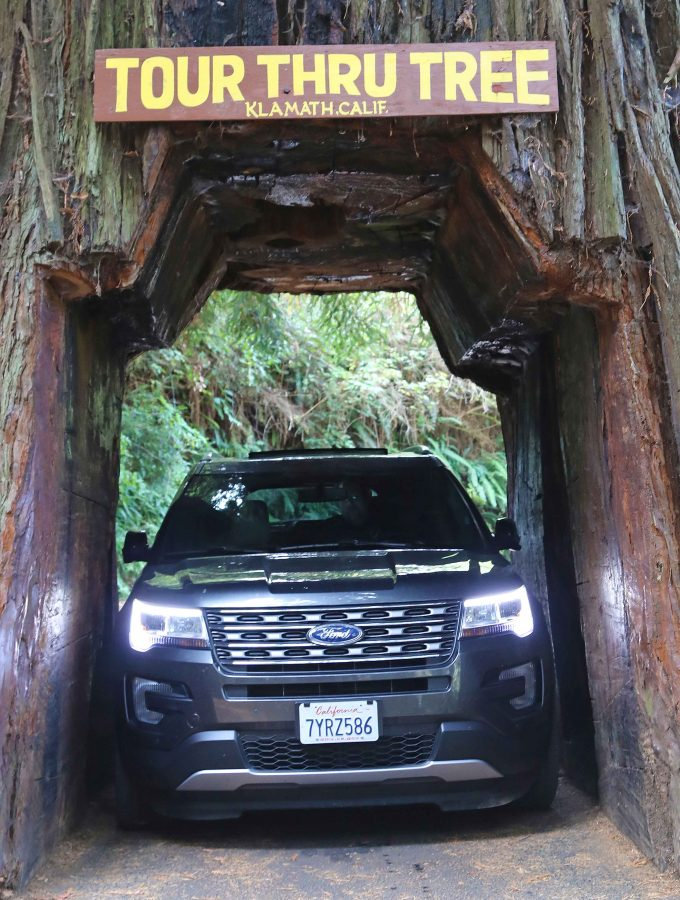 Things to do Redwood National Park