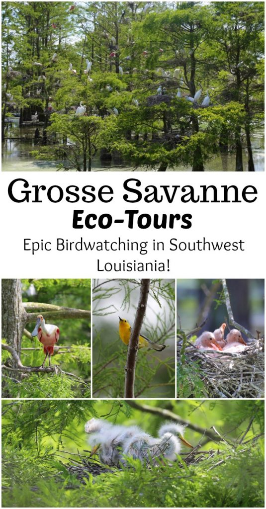 Grosse Savanne Eco-Tours is Southwest Louisiana just South of Lake Charles Louisiana. The Naturalist will take out and give an up-close wildlife adventure! #GrosseSavanne #ecotour #ecotourism wildlifephotography