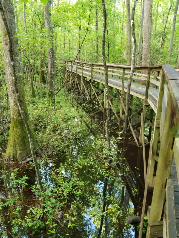 Congaree National Park Travel Tips