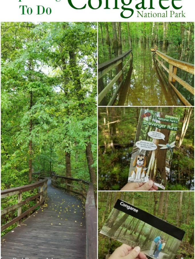 Things to do at Congaree National Park