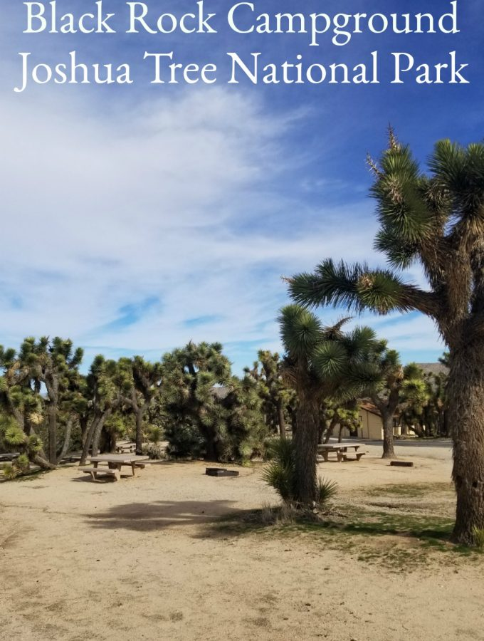 Black Rock Campground – Joshua Tree NP
