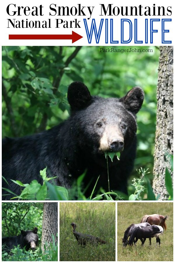 Great Smoky Mountains National Park Wildlife